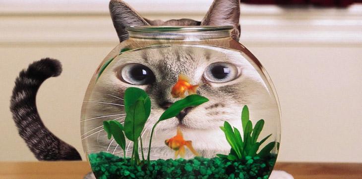 Смешная кошка и аквариум