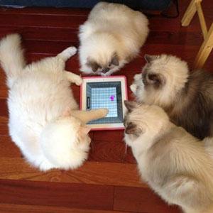Игра для кошек на планшет iPad